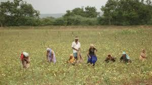 Bardana Mobile App for Farmers